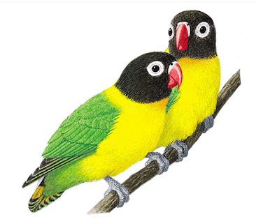 Burung lagbert