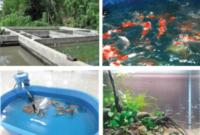 Cara Ternak Ikan