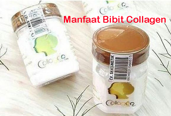Manfaat Bibit Collagen