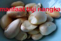 manfaat biji nangka