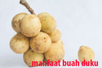 manfaat buah duku
