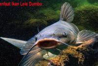 Cara Budidaya Ikan Lele