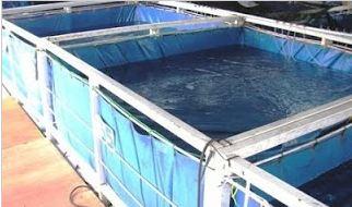 kolam ikan sidat