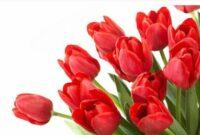 bunga tulif