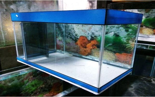 persiapan akuarium