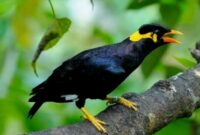 7 Jenis Burung Yang Bisa Dilatih Bicara
