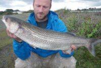 Umpan Ikan Belanak