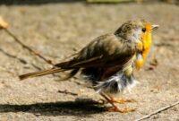 penyakit burung