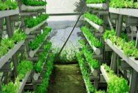 cara menanam daun mint hidroponik