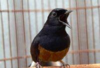 nama burung yang bagus dan hoki