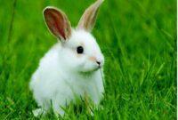 Jenis Kandang Kelinci
