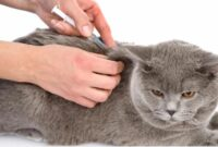 harga vaksin kucing 2021