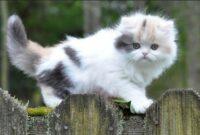 jenis kucing di indonesia