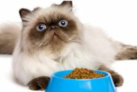 makanan kucing anggora biar cepat gemuk