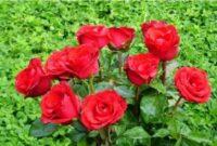 morfologi bunga mawar