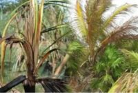 pengendalian hama kelapa