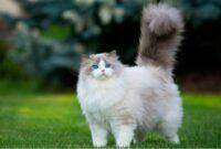 vitamin kucing agar gemuk