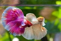ikan hias air tawar aquarium