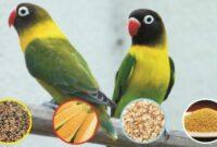 cara membuat vitamin untuk lovebird