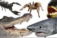 hewan-paling-berbahaya-di-rusia