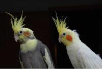 jenis-burung-peliharaan-yang-cocok-untuk-orang-tua