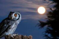 mitos-memelihara-burung-hantu