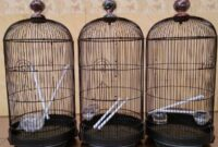 tips-memilih-sangkar-lovebird