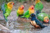 vitamin-untuk-burung-di-musim-hujan