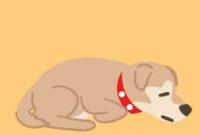 anjing trauma