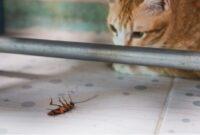 kucing makan kecoa